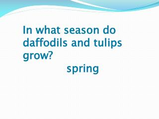 In what season do daffodils and tulips grow?