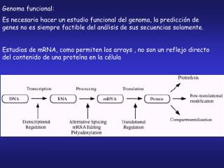 Genoma funcional: