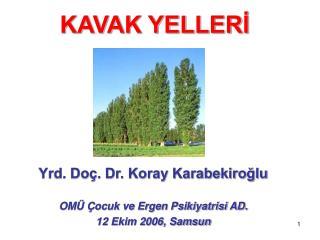 KAVAK YELLERİ