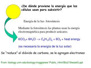 6CO 2 + 6H 2 O --> C 6 H 1 2 O 6  + 6O 2  + heat energy (es necesaria la energía de la luz solar)