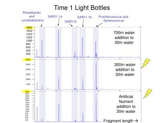 Time 1 Light Bottles