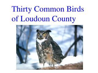 Thirty Common Birds  of Loudoun County