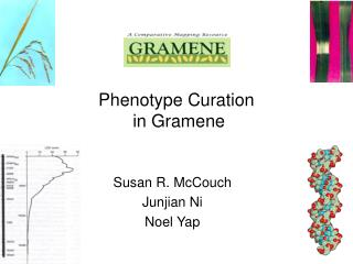 Phenotype Curation  in Gramene