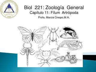 Biol  221: Zoología  General Capítulo 11: Fílum  Artrópoda Profa. Marcia Crespo,M.A .