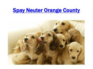 Spay Neuter Orange County