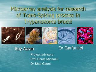 Microarray analysis for research of Trans-Spicing process in Trypanosoma brucei