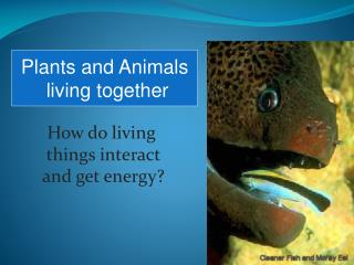 How do living  things interact  and get energy?