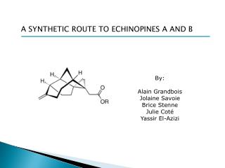 A SYNTHETIC ROUTE TO ECHINOPINES A AND B