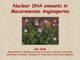 Nuclear DNA amounts in Macaronesian Angiosperms