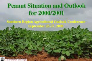 Peanut Situation and Outlook for 2000/2001
