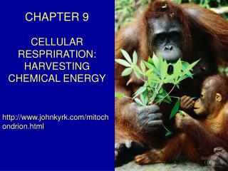 CHAPTER 9 CELLULAR RESPRIRATION: HARVESTING CHEMICAL ENERGY