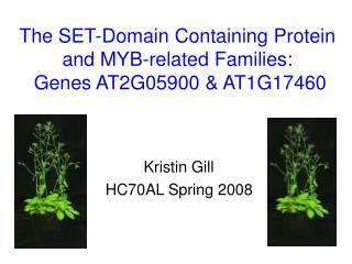 The SET-Domain Containing Protein and MYB-related Families:  Genes AT2G05900 & AT1G17460