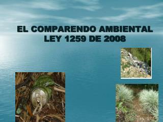 EL COMPARENDO AMBIENTAL  LEY 1259 DE 2008