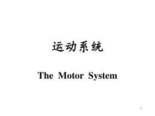 运动系统 The  Motor  System