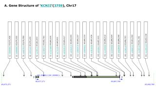 A. Gene Structure of ' KCNJ2 '( 3759 ), Chr17