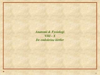 Anatomi & Fysiologi VIII - X De endokrine kirtler