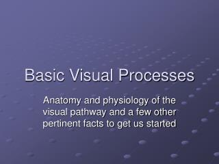Basic Visual Processes