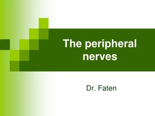 The peripheral nerves