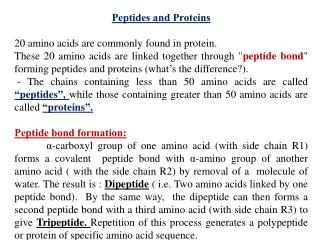 Peptides and Proteins 20 amino acids are commonly found in protein.