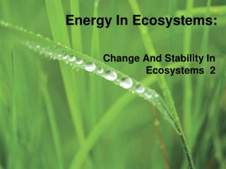 Energy In Ecosystems: