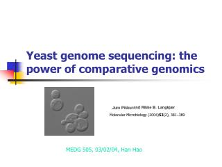 Yeast genome sequencing: the power of comparative genomics