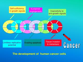 The development of  human cancer cells