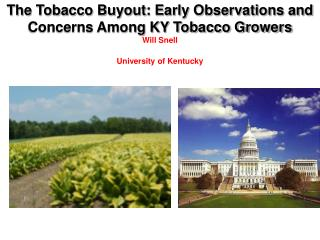 The Tobacco Buyout: Early Observations and Concerns Among KY Tobacco Growers Will Snell