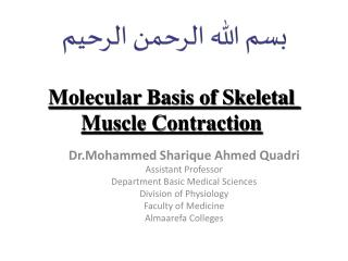 Molecular Basis of Skeletal Muscle Contraction