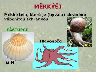MEKK  I
