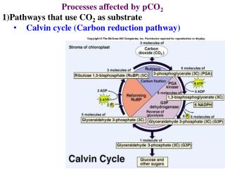 Processes affected by pCO 2 Pathways that use CO 2  as substrate