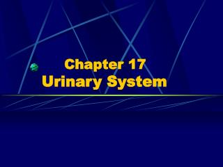 Chapter 17 Urinary System