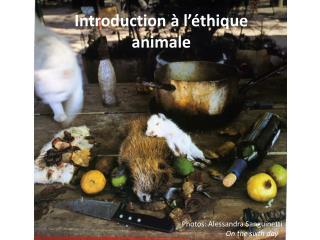 Introduction à l'éthique animale