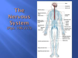 The Nervous System (Pgs. 196-217)