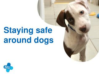 Staying safe around dogs