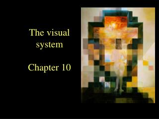 The visual system Chapter 10