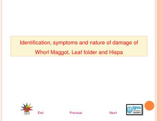 Identification, symptoms and nature of damage of Whorl Maggot, Leaf folder and Hispa
