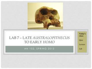 LAB 7 – LATE  AUSTRALOPITHECUS  TO EARLY  HOMO