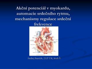 Akcn  potenci l v myokardu, automacie srdecn ho rytmu, mechanismy regulace srdecn  frekvence