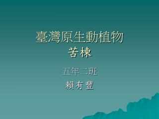 臺灣原生動植物 苦楝