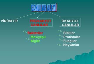 V?R�SLER PROKARYOT            �KARYOT CANLILAR                CANLILAR