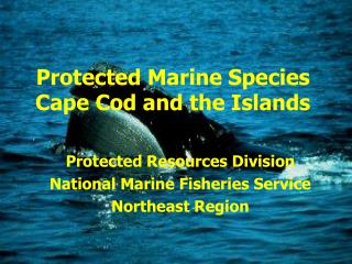 Protected Marine Species Cape Cod and the Islands