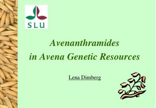 Avenanthramides  in Avena Genetic Resources Lena Dimberg