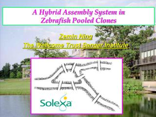 A Hybrid Assembly System in  Zebrafish  Pooled Clones