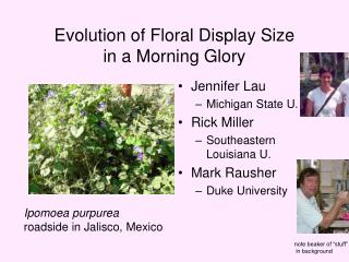 Evolution of Floral Display Size in a Morning Glory
