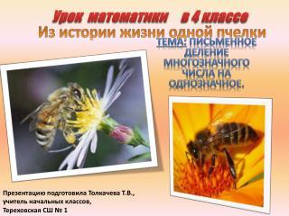 Из истории жизни одной пчелки