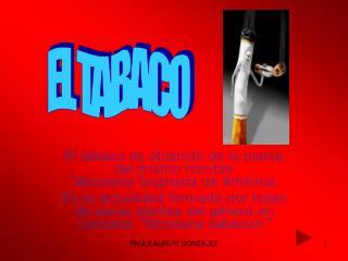 """El tabaco es obtenido de la planta del mismo nombre """" Nicotiana"""" originaria de América."""