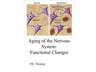 Aging of the Nervous System: Functional Changes