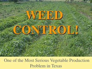 One of the Most Serious Vegetable Production Problem in Texas