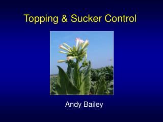 Topping & Sucker Control