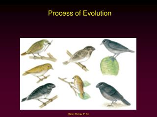 Process of Evolution